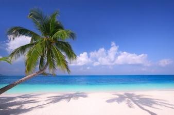 Bella spiaggia con palme