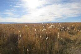Bellissimi fiori di campo