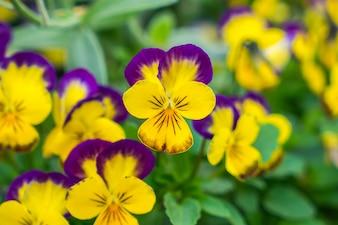 Bellissimi fiori gialli Piccoli.