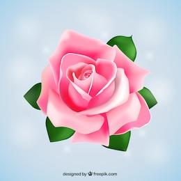Big rosa