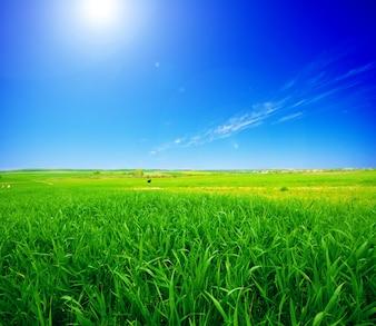 Campo verde con il sole