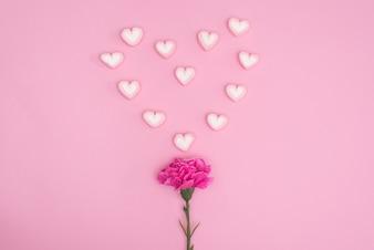 Caramella di valentines con fiore di garofano su blackground rosa