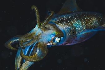 Carta da parati di multicolore calamaro su sfondo nero