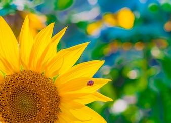 Carta da parati scenica con un primo piano di girasole contro sfondo verde con fiori. Primo piano di girasole, messa a fuoco selettiva su sfondo sfocato