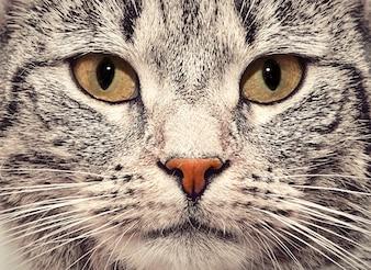 Cat viso vicino