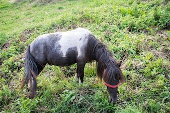 Cavallo sul pascolo estivo. Pascolo di pascolo sul prato