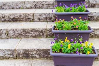 Celebrazione fiore stagionali giardino giorno