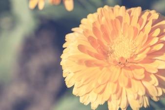 Close up macro fiore