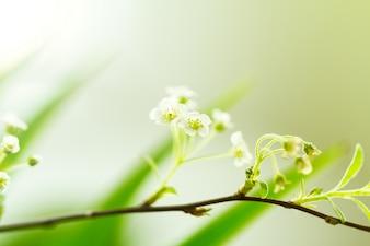 Closeup di piccolo fiore bianco sulla filiale. Bella Bokeh. Spazio di copia. Orizzontale.
