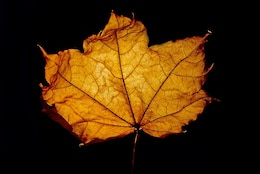 colore di sfondo, foglie, foglia marrone stagione macro