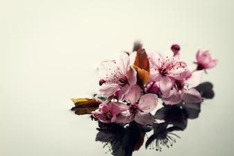 Concetto di natura termale. Closeup di bellissimi fiori viola di PInk su acqua con posto per il testo. Orizzontale.
