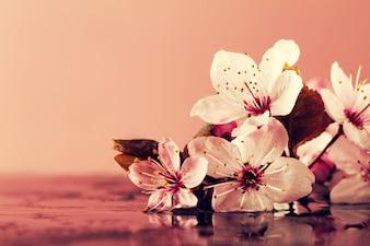 Concetto di natura termale. Closeup di bellissimi fiori viola di PInk su acqua con posto per il testo. Pastello. Tonificante.