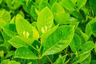 Crescita erba foglia ambiente naturale