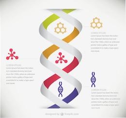 Dna infografica medico