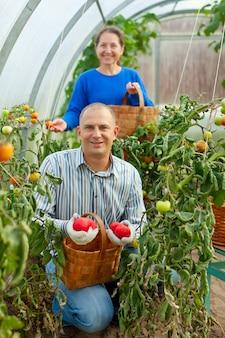 Donna, uomo, raccolto, pomodoro