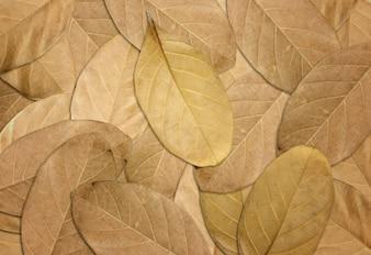 Dry foglie di autunno sfondo