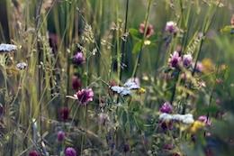 Estate natura in fiore