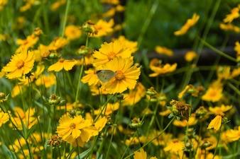 Farfalla in un campo di fiori