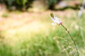 Fiore selvatico fresco su sfondo nativo sfocato.