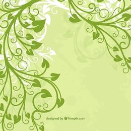 fiore verde foglia