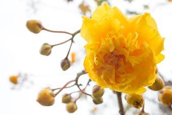 Fiori di seta cotone giallo