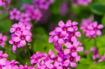 Fiori rosa in foresta