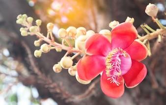 Flora petalo fioritura amazon blossom