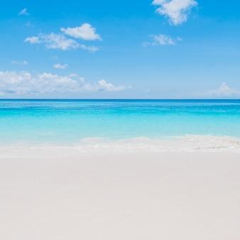 Isola foto e vettori gratis - Palma di cocco ...
