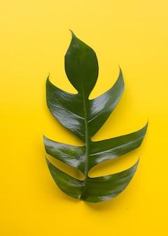 Foglia tropicale verde su sfondo giallo per la progettazione sfondo ecologico o sfondo della carta da parati giungla