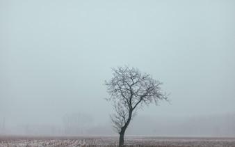 Foglie albero solitario e nebbia