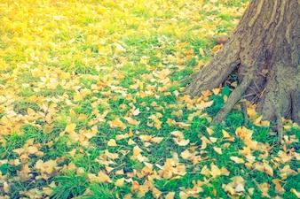 Foglie di autunno giallo su erba verde fresca di sorgente