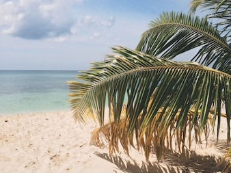 Radici di alberi di grandi dimensioni scaricare foto gratis - Radici palma ...