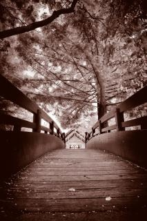 foglie ponte seppia