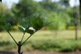 Foglie verdi su un ramo con sfondo fuori fuoco