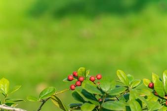 Fotografia naturale naturale di 10 anni di autunno