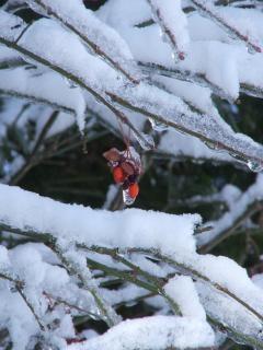 frutti di bosco surgelati, il freddo