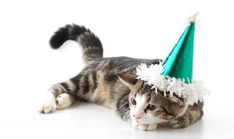 Gatto con cappello da partito