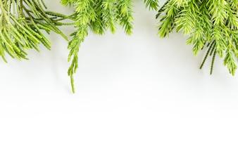 Ginepro, ramoscello di Thuja Bordo di Natale su sfondo bianco