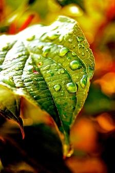 Giornale goccia macro acqua piovana