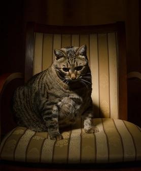 Grande gatto sulla sedia