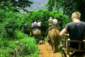 Gruppo di persone su un safari