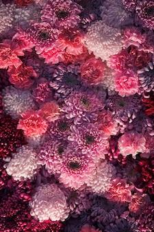 I crisantemi rosa e rossi coprono il muro
