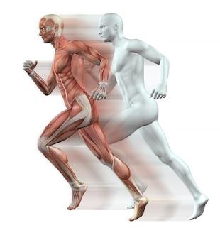 Il rendering 3D di figure maschili in esecuzione con la pelle e il muscolo mappa