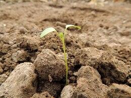 impianto di germe seme marrone terra coltivare il cibo