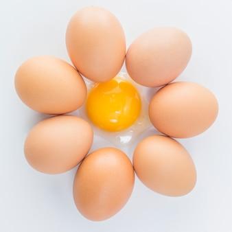 Ingrediente animale pasto cucina cibo pollo