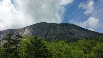 Montagna con alberi