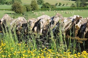 Muro di pietra nella campagna inglese del Cotswolds