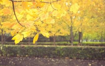 Nella mattina presto del parco, il sole caldo lucida attraverso le foglie e cade in autunno