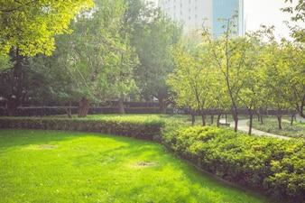 Nella mattina presto del parco, la luce del sole calda scintillava attraverso le foglie
