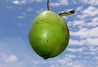 Noce di cocco fresca, sole